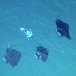 【视频】马尔代夫哈尼法鲁湾2018年度蝠鲼大party