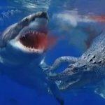 潜水安全:朋友鼓起勇气要去鲨鱼潜水了,我对她说……